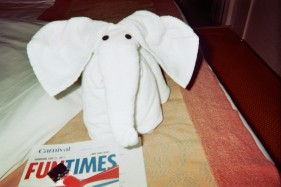 I can't express how much I loved seeing these different towel animals every night. It blew my mind.